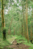 Gångbana i skog Arkivbild
