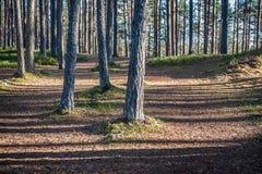 Gångbana i skogen, tidiga vårar i reserv Landskap balsam Arkivbild