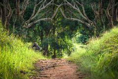 Gångbana inom den tropiska skogen som omges av trädet och gräs Royaltyfri Bild