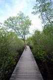 Gångbana mangrovarna Royaltyfri Bild