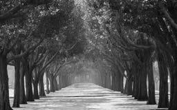 Gångbana med träd i symmetri på båda sidor royaltyfria foton