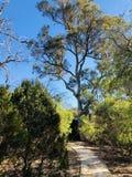 Gångbana med trädet fotografering för bildbyråer