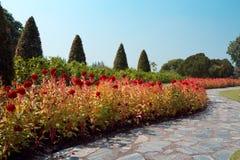 Gångbana och blommor i trädgård Fotografering för Bildbyråer