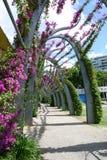 Gångbana till och med Brisbanes Southbank royaltyfri bild