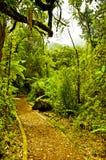 Gångbana till och med djungeln Royaltyfri Foto