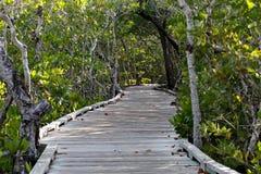 Gångbana till och med mangrovar Arkivfoton