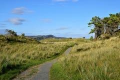 Gångbana till stranden i en Forest Park, Co Donegal Irland royaltyfri bild