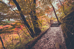 Gångbanabana på Nyoho Mt med den japanska lönnlövet Royaltyfria Bilder