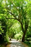 Gångbanagrändbana med gröna träd Arkivbilder