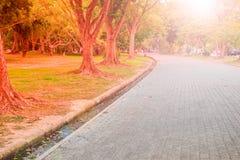 Gångbanan i det offentligt parkerar Töm cykelvägen i en parkera Arkivbilder
