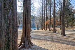 Gångbanan mellan träden på båda sidor Royaltyfri Foto