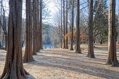 Gångbanan mellan träden på båda sidor Royaltyfria Bilder