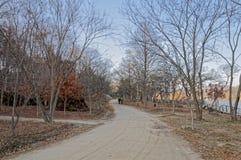Gångbanan mellan träden på båda sidor Fotografering för Bildbyråer