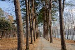 Gångbanan mellan träden på båda sidor Arkivbilder