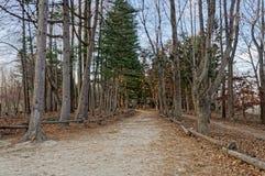 Gångbanan mellan träden på båda sidor Arkivbild