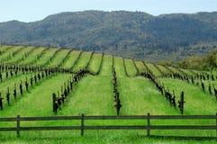 gången vingård Arkivfoton