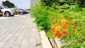 Går grön infrastruktur Royaltyfria Bilder