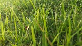 Går små växter för ho, når de har regnat i trädgården som är utomhus- i solig dag lager videofilmer