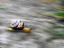går snailen Arkivbild