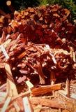 går trä Arkivbild