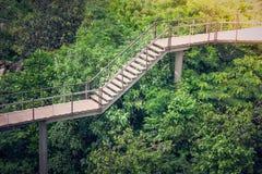 Går trähimmel för sidosikten, eller gångbanan korsar över treetopen som omges med grönt naturligt och solljus Royaltyfri Foto