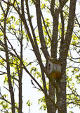 gård för white för USA för hus för tillbaka färg för fågel blå hängande röd Arkivbilder