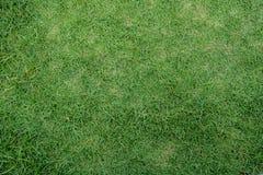 Gårdbakgrund för grönt gräs royaltyfri bild