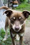 Gårdhund Royaltyfri Fotografi