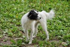 Gårdhund Arkivfoto