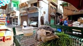 Gås i lager för bonde` s i marknad av Kairo, Egypten lager videofilmer