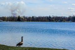 Gås som ser över Pell Lake, Wisconsin med rökmolnet arkivfoto