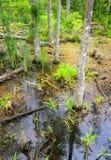 Gåsliten vikdelstatspark Arkivbild