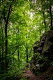 Gåtaskog Royaltyfri Foto