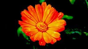 Gåtfullt i apelsin Arkivfoto