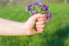 Gåva av våren Fotografering för Bildbyråer
