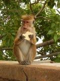 Gåva för en apa Royaltyfria Bilder
