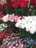 Gåva för en kvinna, blommor royaltyfri bild