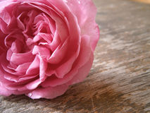 Gåvor för älsklingen Royaltyfri Foto