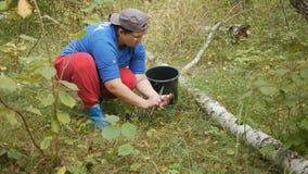 Gåvorna av hösten ekorre för skog s för boletusbröd edulis lager videofilmer