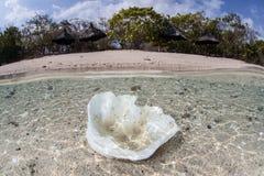 Géant Clam Shell Near Beach Images stock
