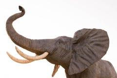 Géant de tronc d'Elefante Trompa d'éléphant photographie stock libre de droits