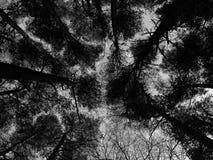 Géants de ciel photos stock