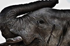 Géants doux du ` s de l'Afrique Image libre de droits