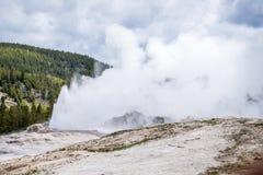 Géiser fiel viejo que entra en erupción - amarillo del parque nacional de Yellowstone Fotografía de archivo libre de regalías