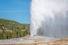 Géiser fiel viejo que entra en erupción en Yellowstone Fotografía de archivo libre de regalías