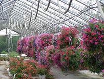Générosité des fleurs Photo stock