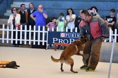GÉNOVA, ITALIA - 21 de mayo de 2016 - exposición canina internacional pública anual Fotos de archivo