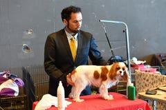 GÉNOVA, ITALIA - 21 de mayo de 2016 - exposición canina internacional pública anual Imagen de archivo libre de regalías