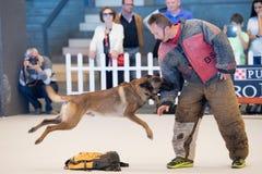 GÉNOVA, ITALIA - 21 de mayo de 2016 - exposición canina internacional pública anual Foto de archivo libre de regalías