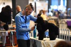 GÉNOVA, ITALIA - 21 de mayo de 2016 - exposición canina internacional pública anual Imagen de archivo